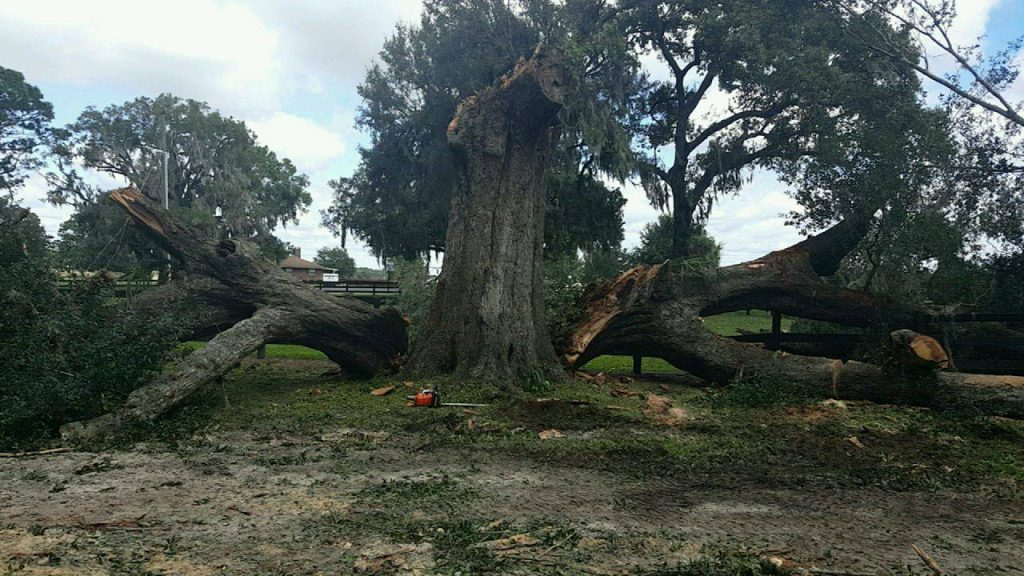 Tree Removal Dunnellon